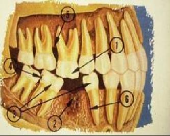 Fırında karabuğday ile tavuk: lezzetli ve tatmin edici. Fırında pişmiş tavuk yemek tarifleri 91
